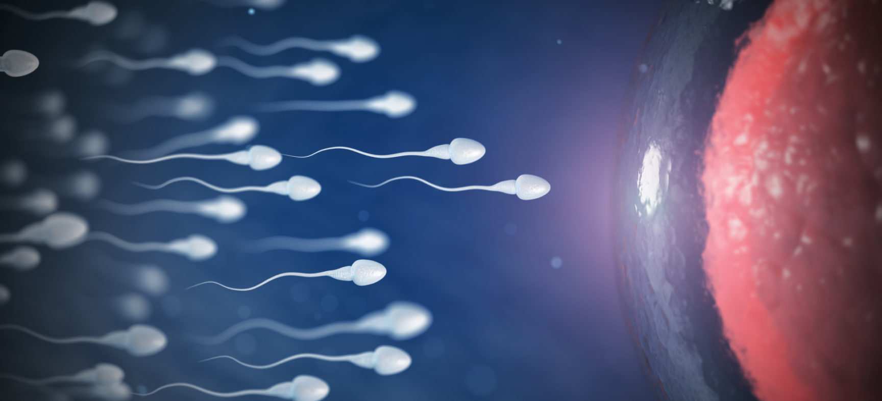 Sperm & Fertility: What You Need to Know